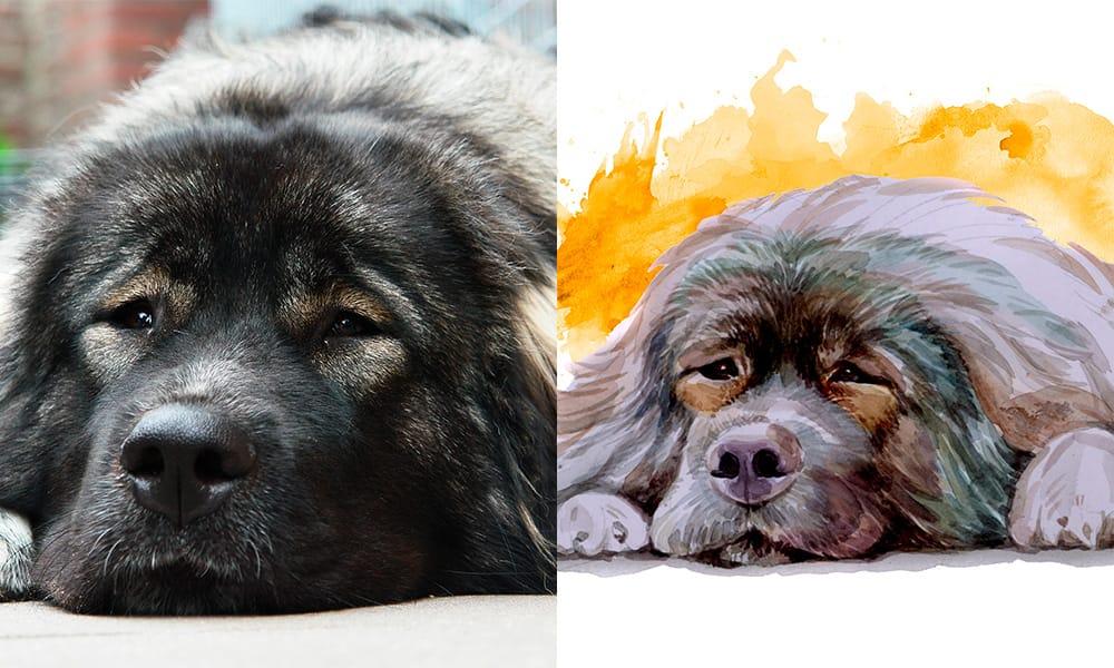 grote hond aquarel