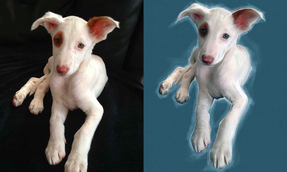 puppy olieverschilderij