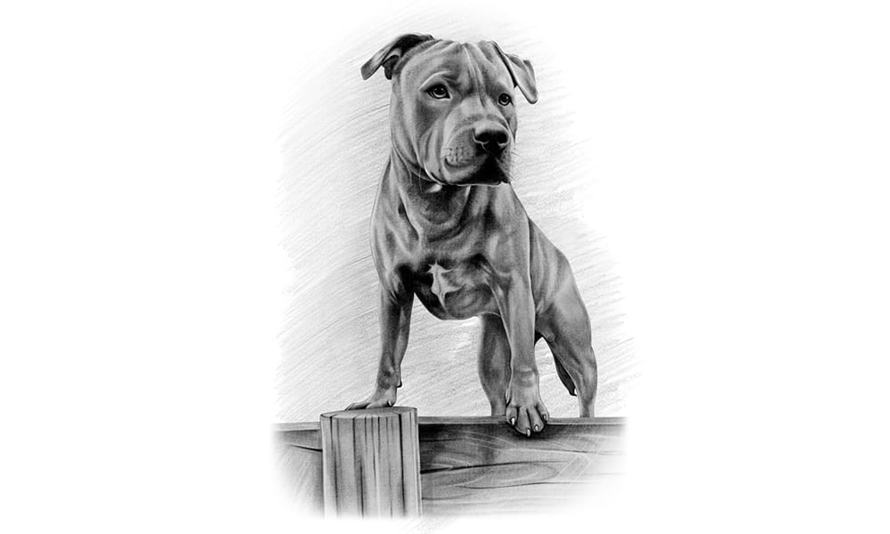 hond potloodtekening